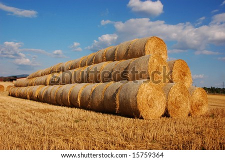 Stapled round hay balls on a harvested field
