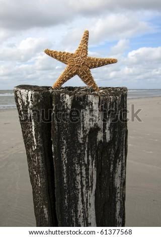 Star - stock photo