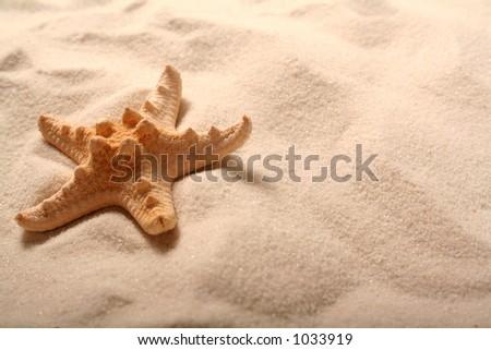 Star Fish - stock photo