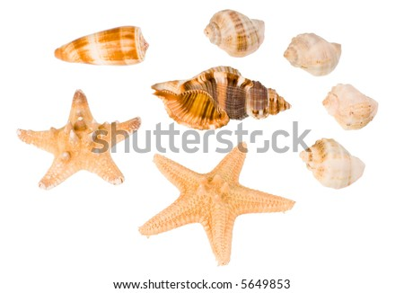 Star-fish and seashells, isolated on white. - stock photo