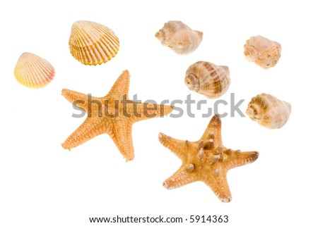 Star-fish and seashells, isolated on white - stock photo
