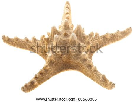 star fish isolated on a white background - stock photo