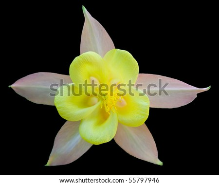 Star flower isolated on black - stock photo