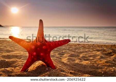 Star on the beach at sunset - stock photo