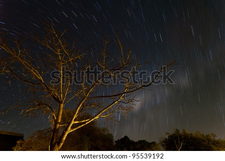 Star stripes in the sky at night with tree in the front - stock photo