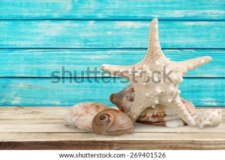 Starfish. A sugar starfish and various seashells. - stock photo