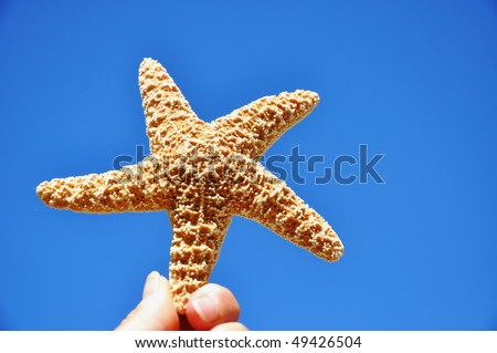 Starfish against pretty blue sky - stock photo