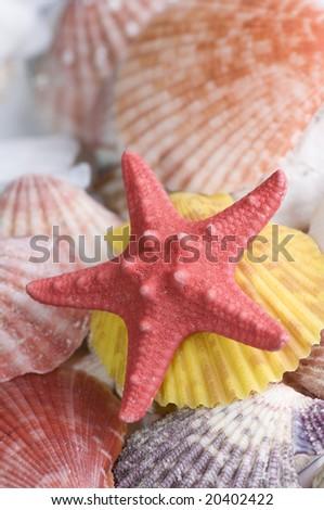 Starfish and colored seashell - stock photo