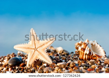 Starfish and Seashell on sand and pebble beach by the sea - stock photo