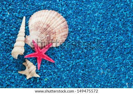 Starfish and seashells beautiful closeup on blue background - stock photo