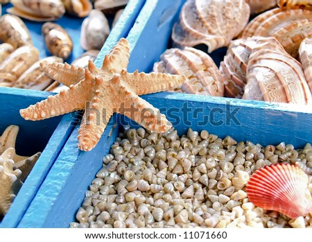 Starfish and seashells from the Mediterranean - stock photo