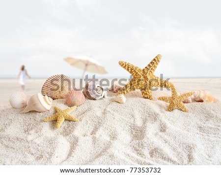 Starfish and seashells in the sand at the beach - stock photo