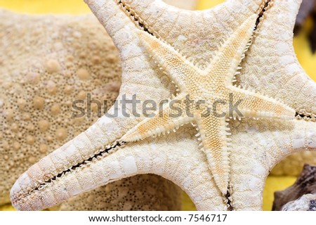 Starfish and seashells on golden sand, close-up