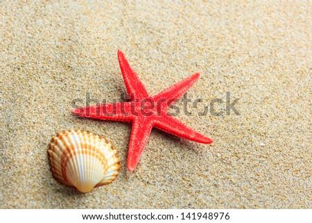 Starfish and seashells on the beach - stock photo