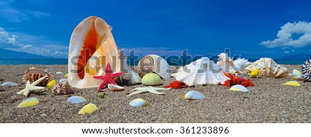 Starfish and seashells on the tropical beach with blue sky - stock photo