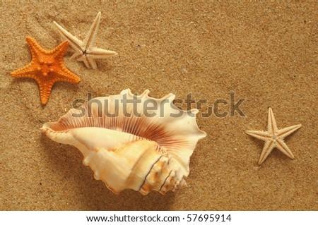 starfish and shells on the beach, vacation memories - stock photo