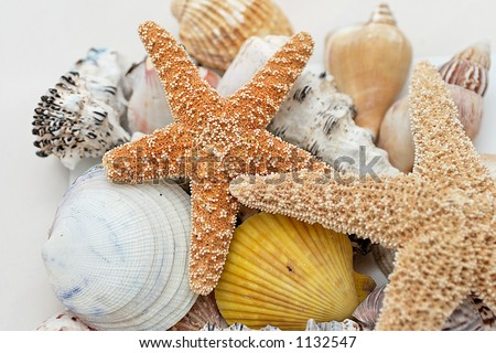 starfish and shells on white