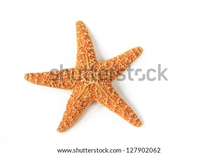 Starfish (Asterias rubens) from the North Sea isolated in front of white background - stock photo