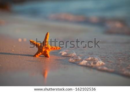 starfish at the beach - stock photo