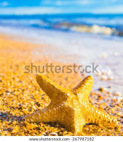Starfish called Wanda In a Sunlit Space  - stock photo