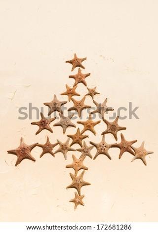 starfish christmas tree queensland - stock photo