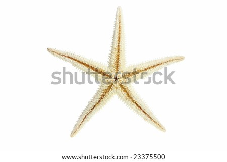 Starfish from oceans deep water on white background - stock photo