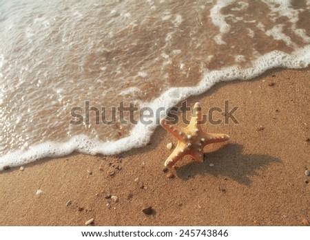 Starfish in sand on the beach. - stock photo