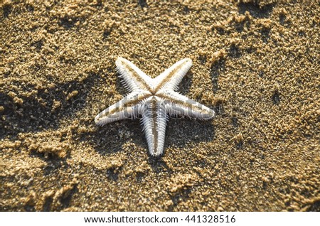 starfish in the beach sand - copy space - stock photo