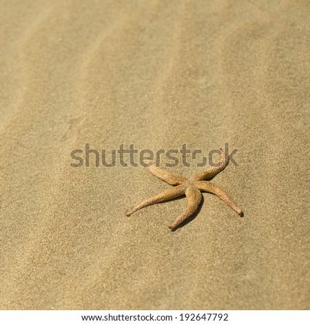 starfish in the sand - stock photo