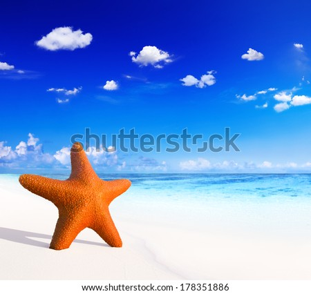 Starfish in The Sand of Tropical Beach