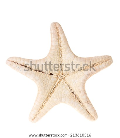 Starfish isolated on a white - stock photo