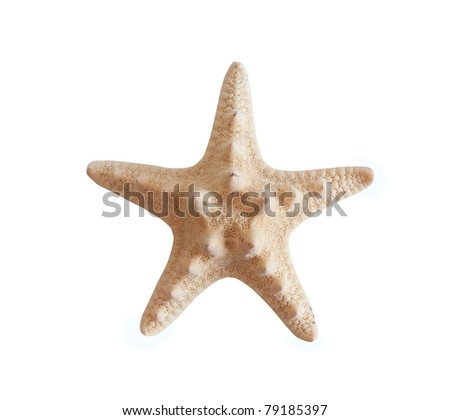 starfish  isolated on a whitebackground - stock photo