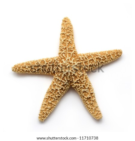 Starfish isolated on white. Sea stars and shells collection. - stock photo