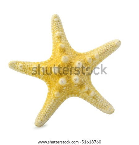 Starfish. It is isolated on a white background. A photo close up - stock photo