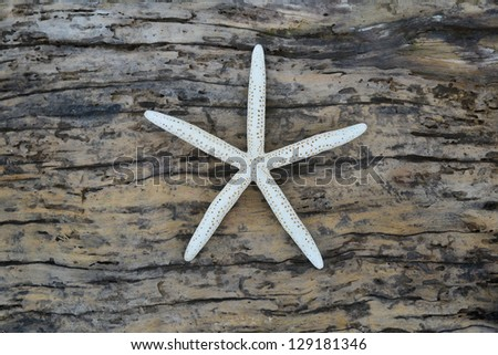 Praying Hands Rosary Cross Carved Into Stock Photo