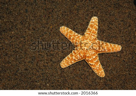Starfish on a beach - stock photo