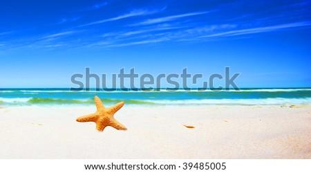 Starfish on a tropical beach - stock photo
