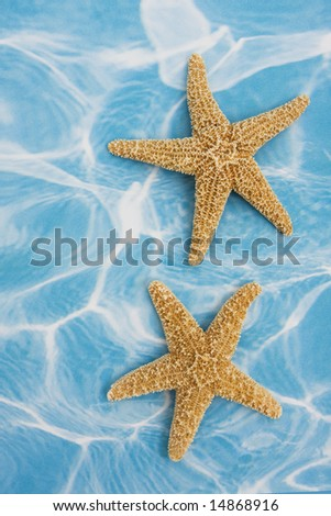 Starfish on blue background â?? a vacation background - stock photo