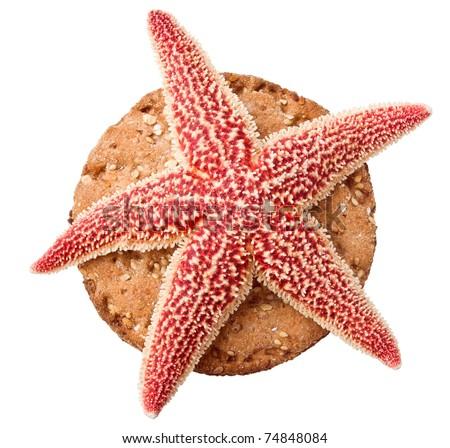 Starfish on crisp toast isolated - stock photo