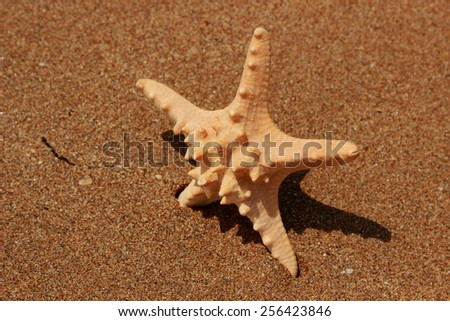 starfish on sand background over Black Sea - stock photo