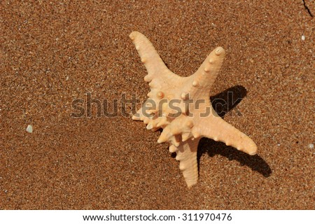 starfish on sand background over Black Sea, East Crimea, Russia  - stock photo