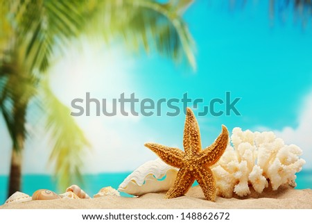 Starfish on sand beach - stock photo
