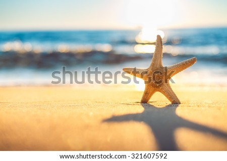 Starfish on the beach at sunrise - stock photo