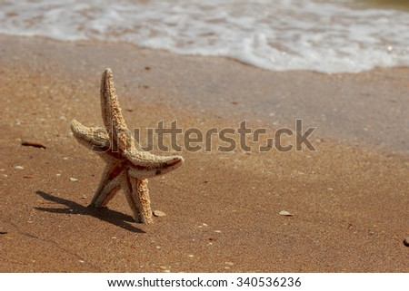 Starfish on the beach background over Black Sea, East Crimea, Russia - stock photo