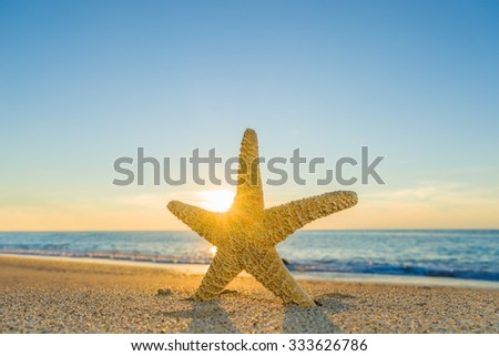 Starfish on the beach in the summertime - stock photo