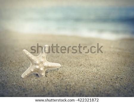 Starfish on the beach under the sunlight. Toned photo. - stock photo