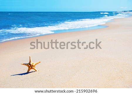 Starfish on the beach. Vacation conceptual image.