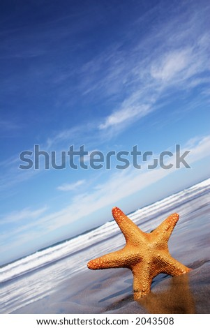 Starfish on the beach with blue cloudscape - stock photo