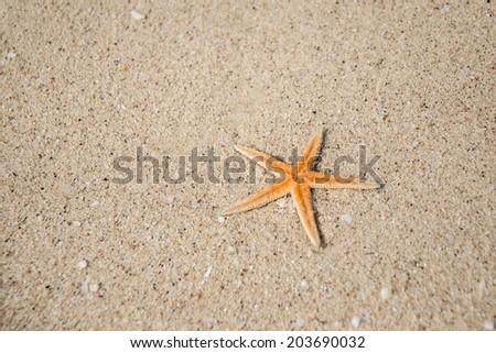 Starfish on the sand - stock photo