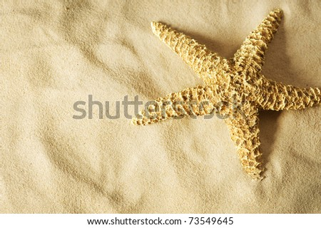 Starfish on the Sand.Vacation concept